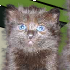 Feline Crisis // Game