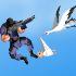 Stork Shot // Game